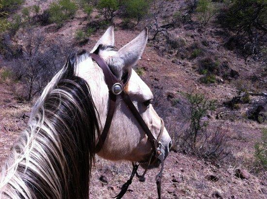 Tierra Chamahua EcoAdventures at Rancho Los Banos: My wonderful horse