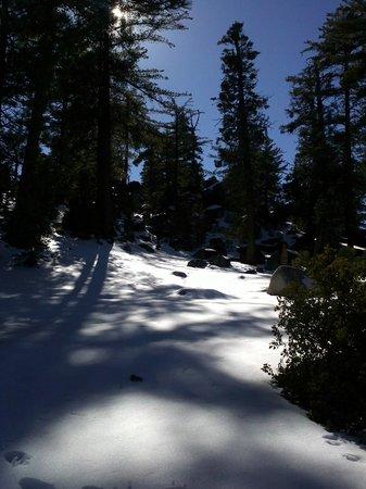 Sierra de San Pedro Martir National Park