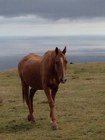 "Harris Hill Cottages: Jack the horse was in the last 2 ""Lord of the Rings"" movies!"