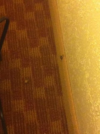 Homewood Suites Richmond Airport: dead bug on the carpet near the bed