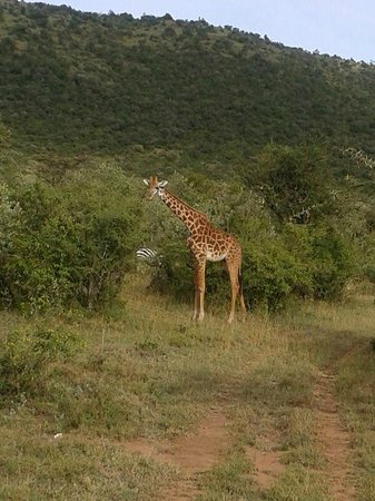 Narok, Kenya: some friends just outside the lodge