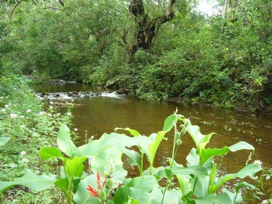 Comala, México: RIO Y RESERVA NATURAL DE HOSTAL POSADA
