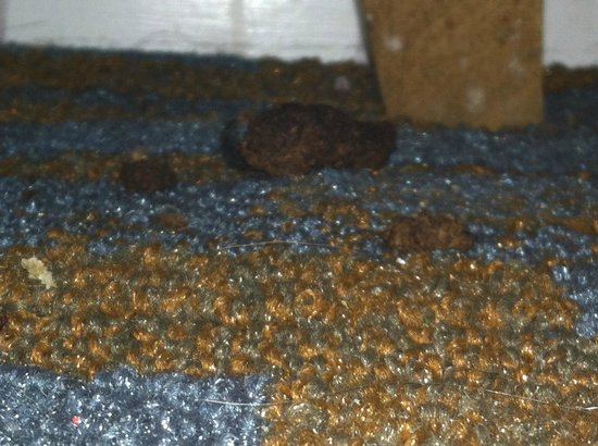 Ocean Sands Beach Inn: Yep that's poop
