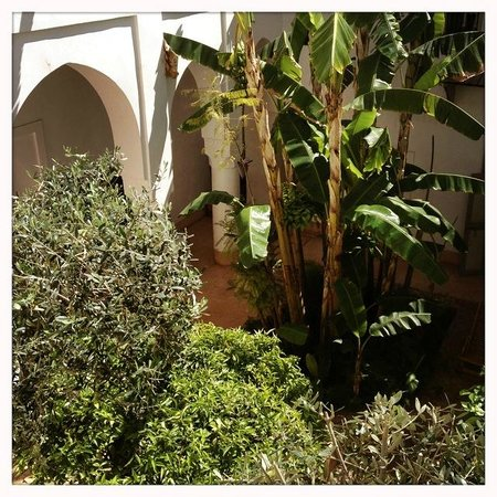 Le Riad Berbere: View of the courtyard
