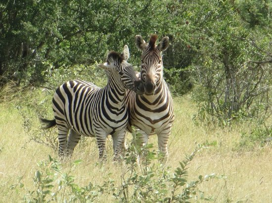 nThambo Tree Camp: up close and personal with the zebras