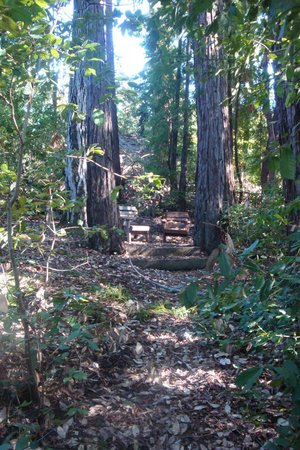 Redwood Croft: Hidden places abound at this B&B