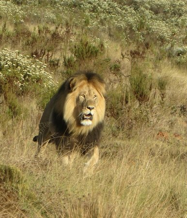 Gondwana Game Reserve: the male on a walk