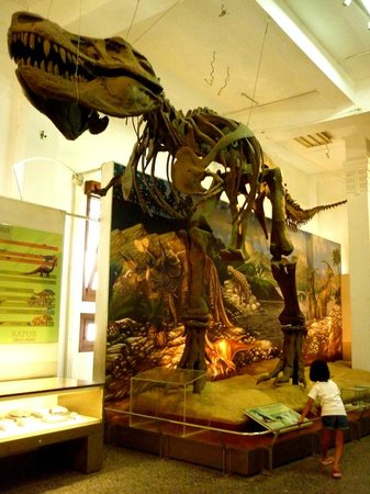 Geology Museum: Fossil