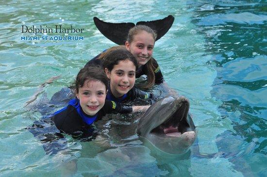 Miami Seaquarium: Dolphin Hug