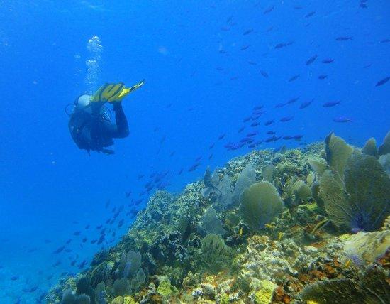 Chinchorro Reef Foto