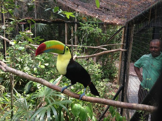 Belize Magnificent Mayan Tours: Belize Zoo