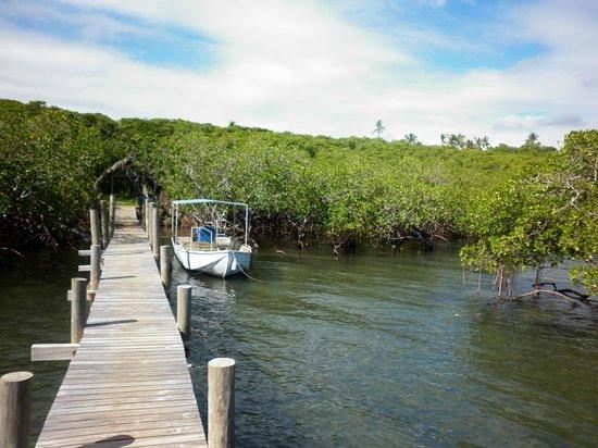 Palmlea Farms Lodge & Bures: Mangroves