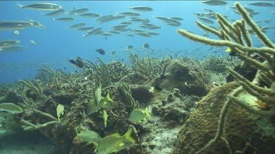 Tunich Reef Foto