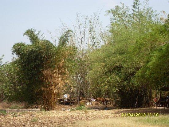 Saguna Baug: Bamboo