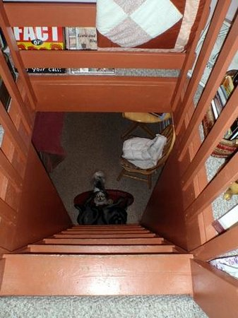 Dog Bark Park Inn: looking down from the loft