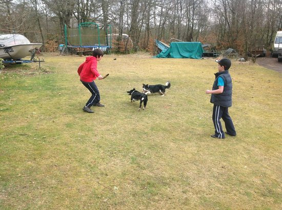 Claonairigh House: 2 happy boys and 2 happy dogs