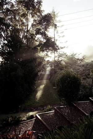 Eden Health Retreat: Misty sunrise