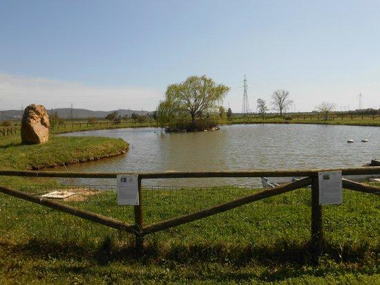 Il laghetto per i cani foto di gualdo del re suvereto for Animali laghetto