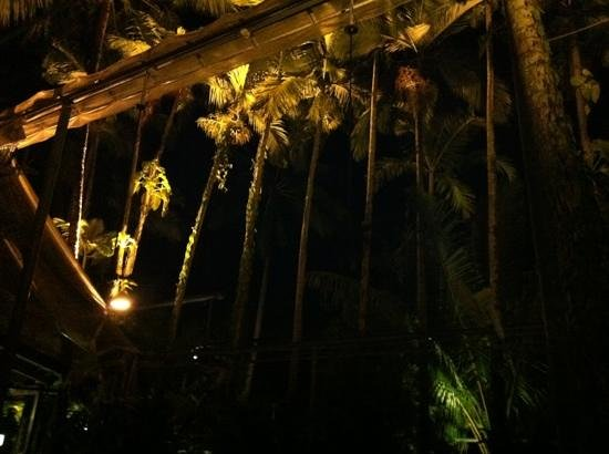 Nautilus Restaurant the canopy and stars & the canopy and stars - Picture of Nautilus Restaurant Port ...