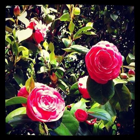 Piante fiorite foto di parco della villa pallavicino - Piante fiorite ...