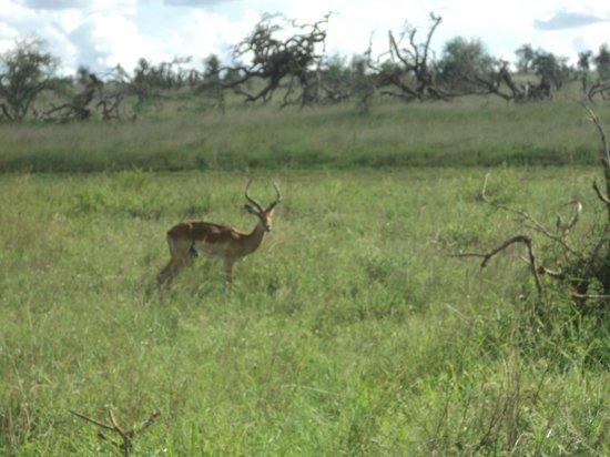 Bruno Safaris - Day Tours: tsavo