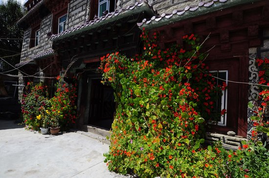 Daocheng Drolma's Guest House: yard with flowers.