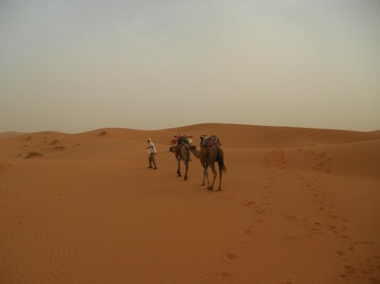 Authentic Morocco - Day Tours: Camel Trekking in the Sahara Desert