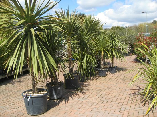 Haskins Garden Centre: Not all pot plants are small!