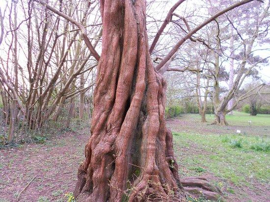 Barnwood Arboretum & Park : Beautiful Tree