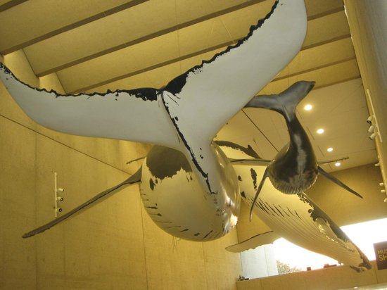 Queensland Museum South Bank: Listen to the Whale songs