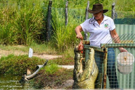 Koorana Crocodile Farm: Croc Feeding