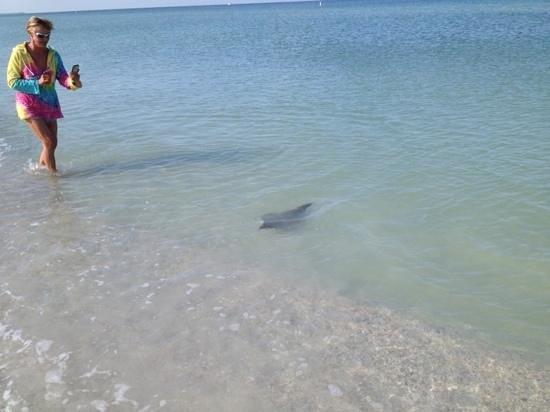 Gulf Strand Resort: скаты на пляже