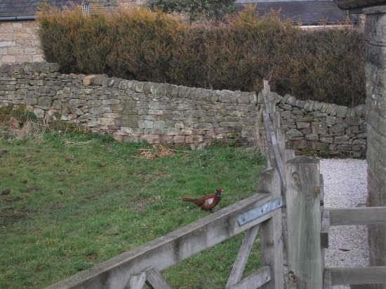 The Devonshire Arms at Beeley: Pheasant