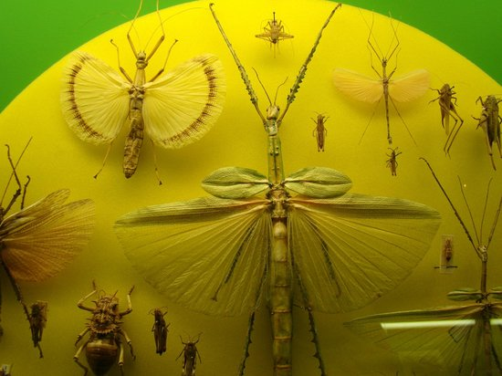 Museo Civico di Storia Naturale: Insects.