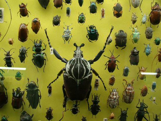Museo Civico di Storia Naturale: Insects