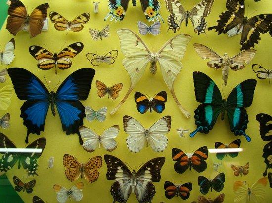 Museo Civico di Storia Naturale: Butterflies.