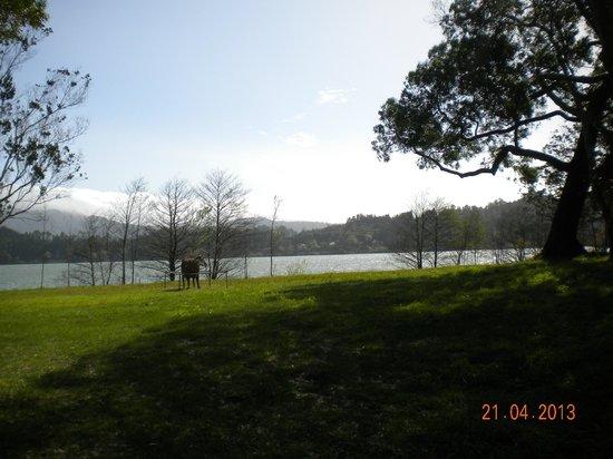 Фернас, Португалия: Lagoa das Furnas sett från forskningscentret