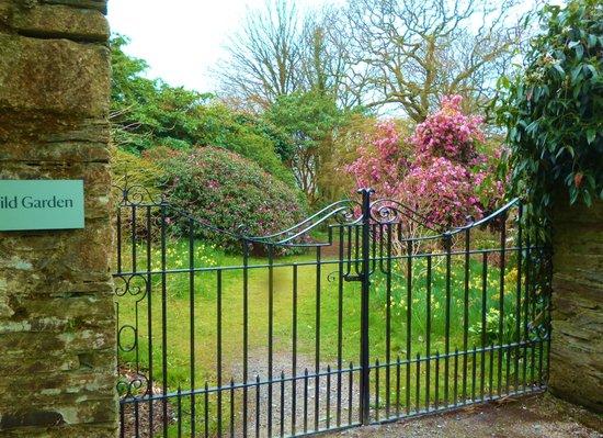 Buckland Abbey: wild garden