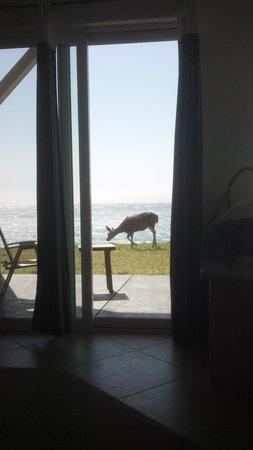 Spyglass Inn at Shelter Cove: the view from Dolphin suite