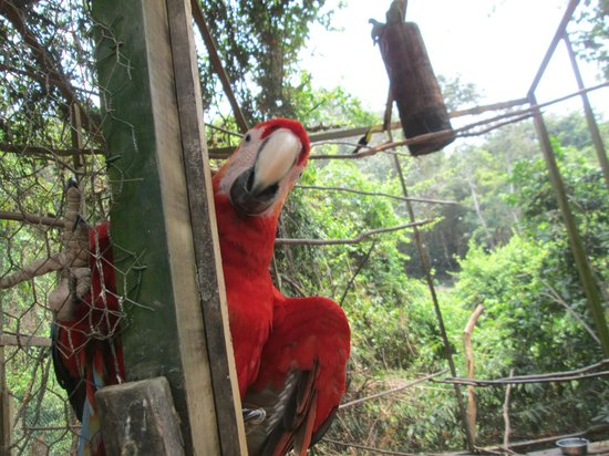 Butterfly Gardens: Macaw