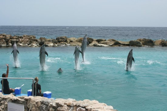 Sunscape Curacao Resort Spa & Casino: Dolphin academy