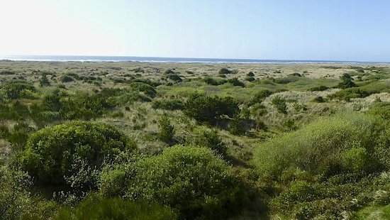 Shilo Inn Suites - Ocean Shores: Sand dunes with beach in the distance