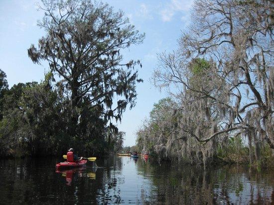 Beaufort Kayak Tours: a tall bald cypress on the left