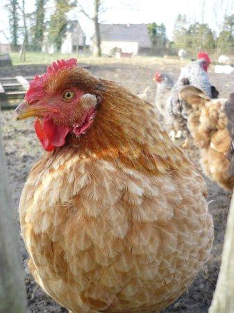 't Maanhof : nog een bewoner van de kinderboerderij