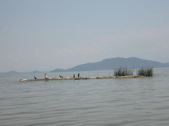 Lake Ziway/ Hara Dembel