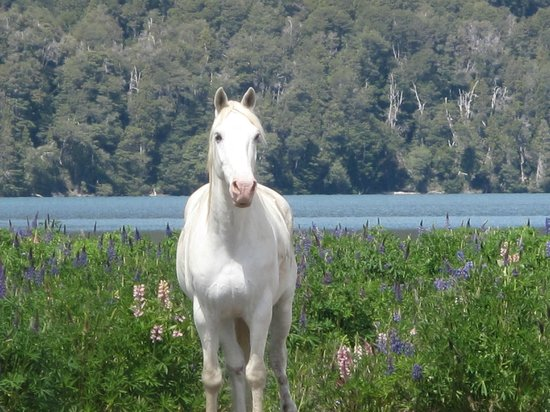 Hotel Tronador : Horse by the lake