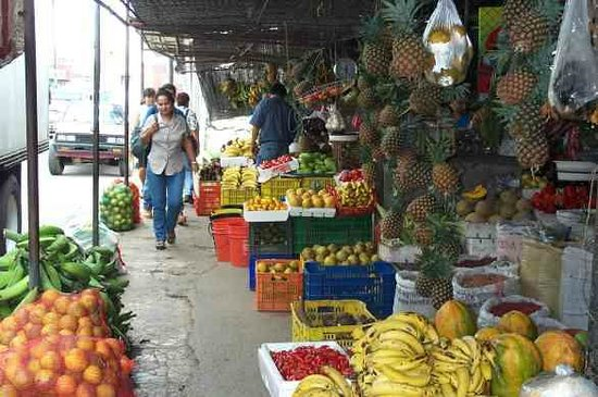 Hotel Ciudad de David: Obst und nochmal Obst, so weit das Auge reicht