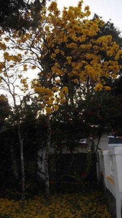 Pouso Frances: Ipê em Flor- Pouso Francês