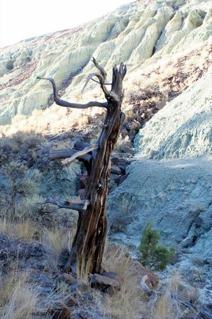 John Day Fossil Beds National Monument: Island in Time Trail