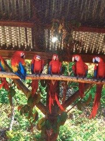 Hotel Punta Islita, Autograph Collection: Macaws